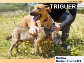 TRIGUER